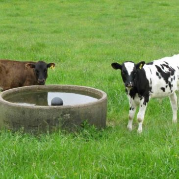 Organic dairy farmers reaping just rewards