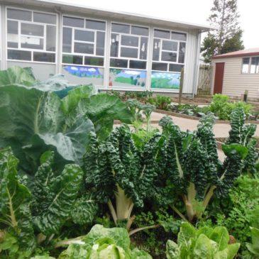 Project Gro 2015 – COMMUNITY GARDEN – OPUNAKE HIGH SCHOOL