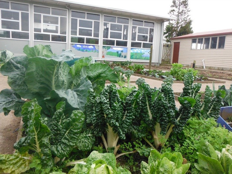Project Gro 2015 – COMMUNITY GARDEN – OPUNAKE HIGH SCHOOL