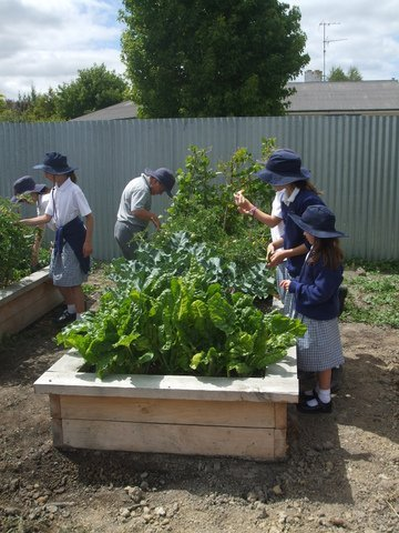 project gro community garden rangiora