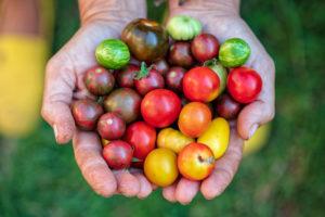 image of tomatillos.