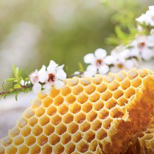 honey comb and manuka flowers.