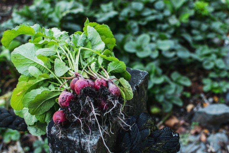 Empowering beginner gardeners